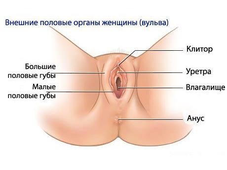Видео женский половой орган