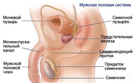 При входе во влагалище член проходит только на 3 см