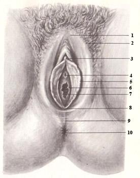 информация может смотреть фото устройство женских половых органов так