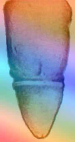 Половой член в форме бабана